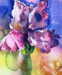 Helen  Shafer Garcia, Watercolor Floribunda